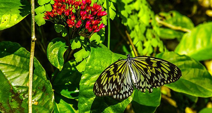 Fairchild Botanical Gardens in Miami, Florida